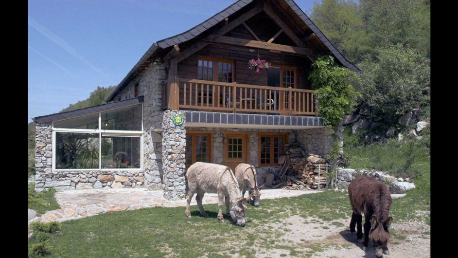 Donkeys in front of house